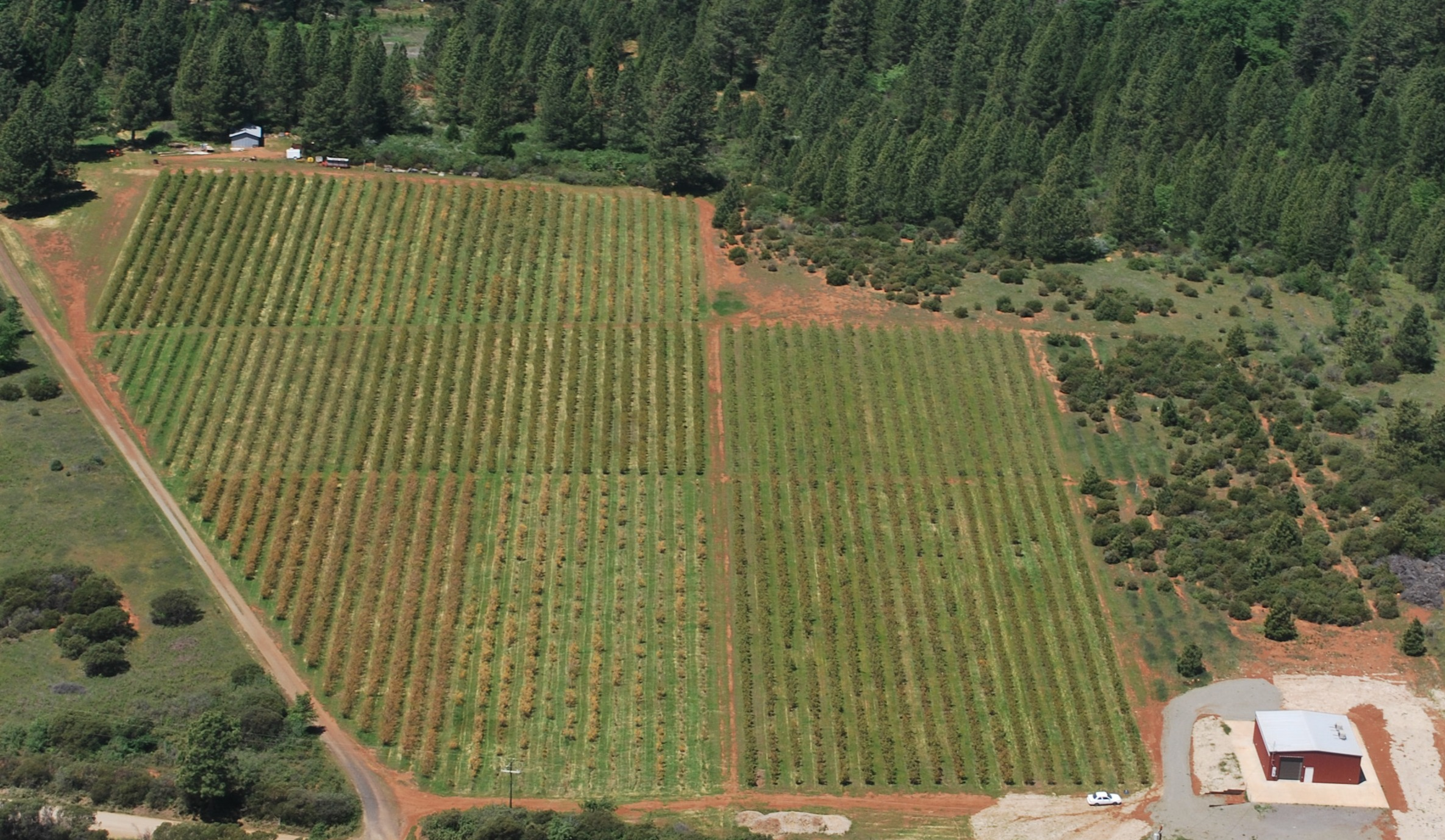 Bird's Eye View Sierra Cascade Blueberry Farm. Uploaded by Sierra Cascade Blueberry Farm