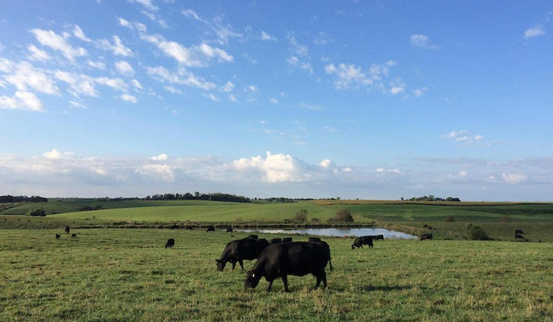 Uploaded by Hoover Angus Farm