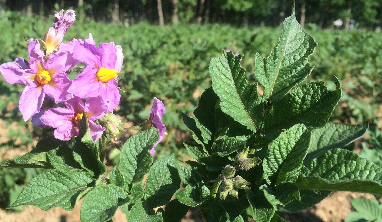 Uploaded by Savoie Organic Farm